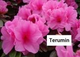 terumim