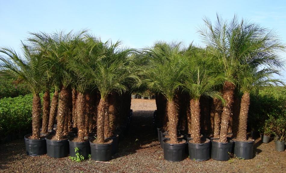 Produtos f nix liebe plantas - Plantas para pleno sol ...